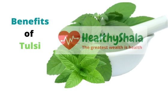 Benefits of Tulsi Leaves| Holy Basil Benefits
