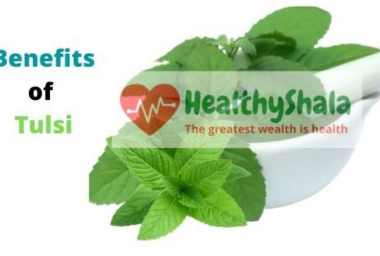 Benefits of Tulsi Leaves